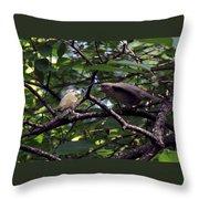 Red-eyed Vireo Feeding Cowbird Fledgling Throw Pillow