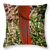 Red Feather Throw Pillow