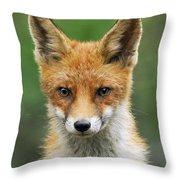 Red Fox Vulpes Vulpes, Hoge Veluwe Throw Pillow