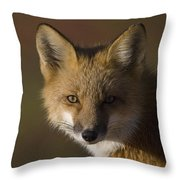 Red Fox Vulpes Vulpes Portrait, Alaska Throw Pillow