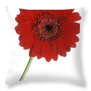 Red Gerber Daisy Throw Pillow