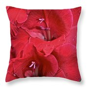 Red Gladiolus Throw Pillow by Susan Herber
