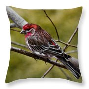 Red Head Black Tail Throw Pillow