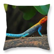 Red-headed Agama Throw Pillow