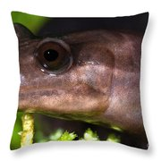 Red Hills Salamander Throw Pillow