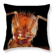 Red Imported Fire Ant Solenopsis Throw Pillow