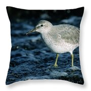 Red Knot Calidris Canutus In Winter Throw Pillow