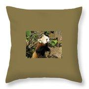 Red Panda Feeding Time Throw Pillow