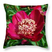 Red Peony Flowers Series 2 Throw Pillow