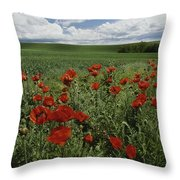 Red Poppies Edge A Field Near Moscow Throw Pillow