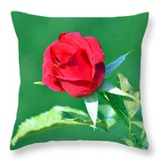 Red Rose With Star-shaped Collar Throw Pillow