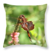 Red Saddlebag Dragonfly In The Marsh Throw Pillow