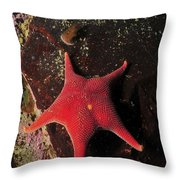Red Sea Star And Limpet On Brown Rock Throw Pillow