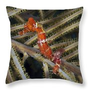 Red Seahorse On Caribbean Reef Throw Pillow