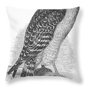 Red-shouldered Hawk, 1890 Throw Pillow