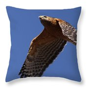 Red-shouldered Hawk - Apache Throw Pillow