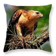 Red-shouldered Hawk With Breakfast Throw Pillow