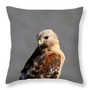 Red-shouldered Throw Pillow