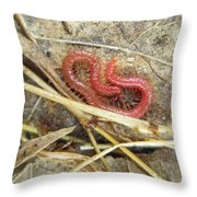 Red Soil Centipede - Strigamia Throw Pillow