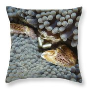 Red-spotted Porcelain Crab Hiding Throw Pillow