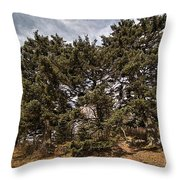 Red Spruce On Whitetop Mountain Throw Pillow