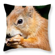 Red Squirrel Throw Pillow