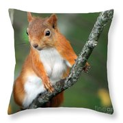 Red Squirrel Portrait Throw Pillow by John Kelly