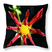 Red Star Dahlia Throw Pillow