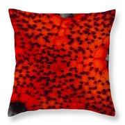 Red Starfish In Raja Ampat, Indonesia Throw Pillow