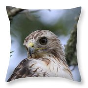 Red-tailed Hawk Has Superior Vision Throw Pillow