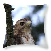 Red-tailed Hawk - Hawkeye Throw Pillow