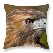 Red-tailed Hawk Portrait Throw Pillow