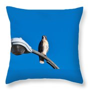 Red-tailed Hawk Surveying Territory Throw Pillow
