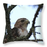Red-tailed Hawk - Young And The Old Throw Pillow