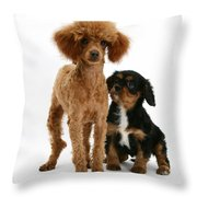 Red Toy Poodle And Cavalier King Throw Pillow