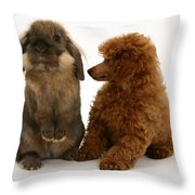 Red Toy Poodle Pup With A Lionhead Throw Pillow