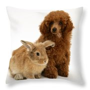Red Toy Poodle Pup With Lionhead-cross Throw Pillow