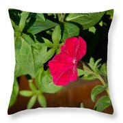 Red Velvet Petunia Throw Pillow