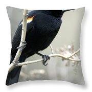 Red-winged Blackbird Agelaius Throw Pillow