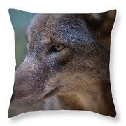 Red Wolf Stare Throw Pillow