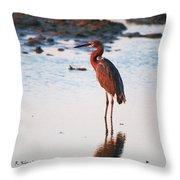 Reddish Egret Basking In The Sunset Throw Pillow