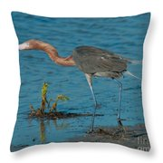 Reddish Egret Hunting Throw Pillow