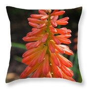 Redhot Popsicle Throw Pillow