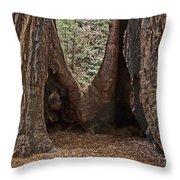 Redwood Feet Throw Pillow
