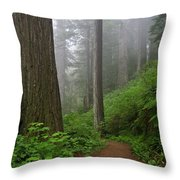 Redwood Path Throw Pillow