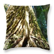 Redwood Trees Forest Art Prints Redwoods Throw Pillow