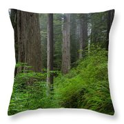 Redwoods Along Ossagon Trail Throw Pillow