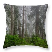 Redwoods In Breaking Mists Throw Pillow
