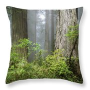 Redwoods In May Throw Pillow