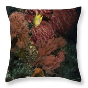 Reef Sponge Coral And Yellow Fish Throw Pillow